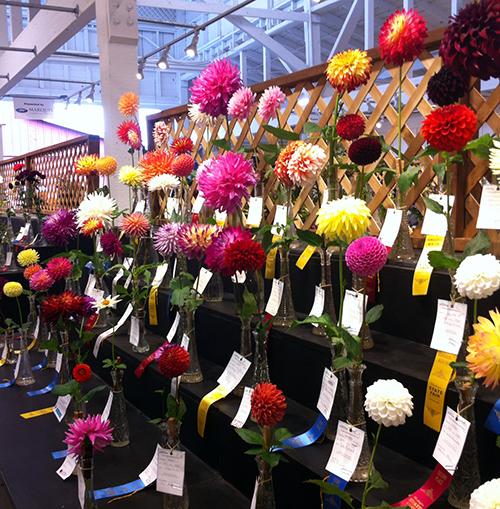 SF_Flowers